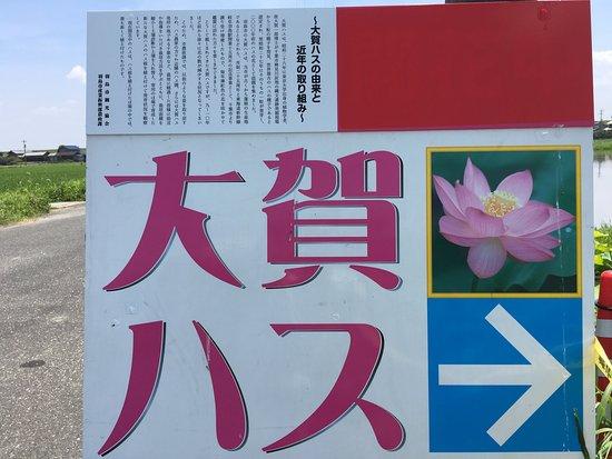 羽島市照片