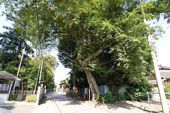 Shiraoka, Japón: 市指定天然記念物イヌザクラの木