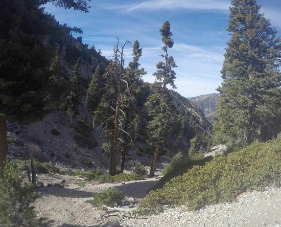 Mount Baldy, CA: Icehouse Trail - # N