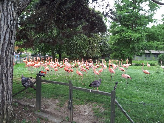 coupon kölner zoo