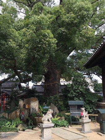 Horaku-ji Temple