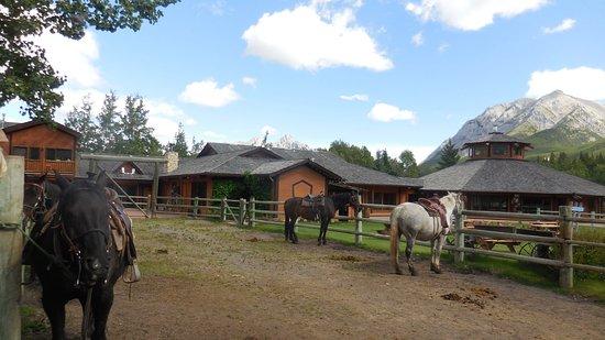 Kananaskis Country, Kanada: Spacious ranch with beautiful horses