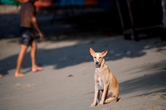 Dikwella, Sri Lanka: Poppi the Queen of the Bay (Salt House resident dog)