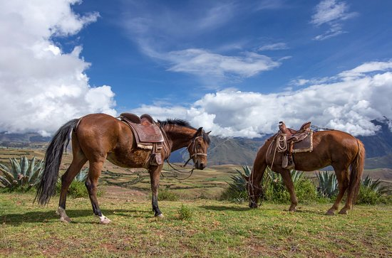Cusco for You Salineras Ranch: Horses