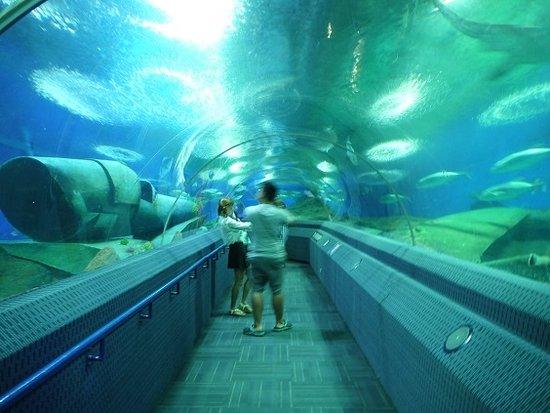 UNDER SEA WORLD - Picture of Underwater World Pattaya, Bang Lamung ...