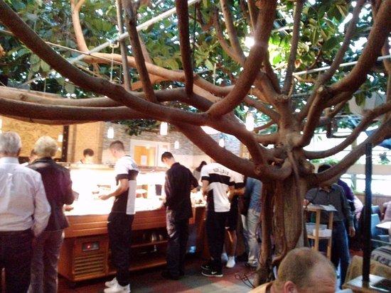 Bambus Garten Düsseldorf ein gummibaum und das buffet im treibhaus jetzt bambus garten