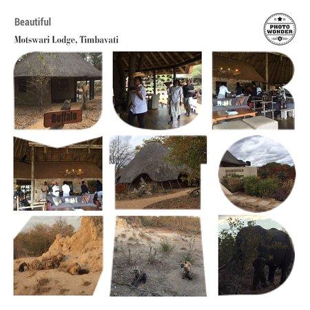 Timbavati Private Nature Reserve-bild