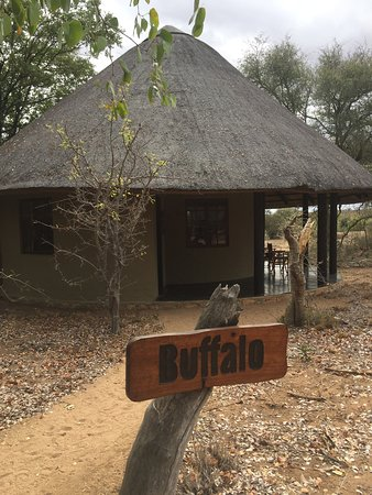 Timbavati Private Nature Reserve ภาพถ่าย