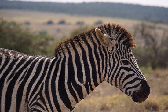 Addo Elephant National Park, Sudáfrica: photo4.jpg