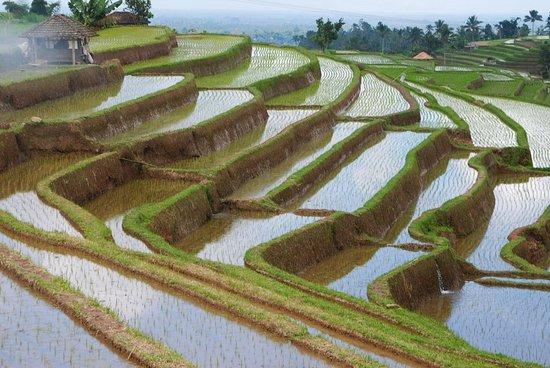 Zdjęcie Jatiluwih Green Land