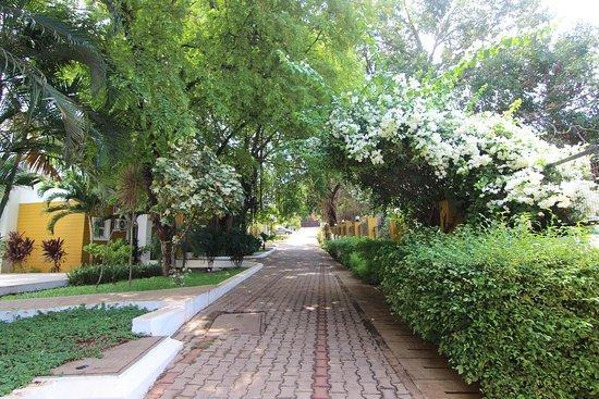 Anjuna, India: Lush landscaped driveway