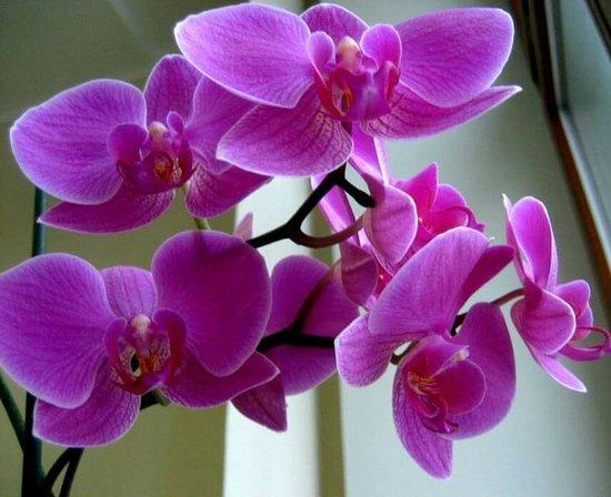 Orhideya SaunaLux