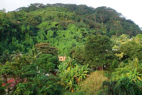 Hanneman Holiday Residence: Near reception like a jungle :-)
