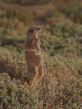 Meerkat Adventures: What's the day looking like?