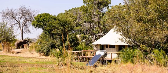 Kafue National Park, Zambia: Elephant in Camp