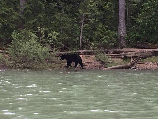 Blue River, كندا: photo1.jpg