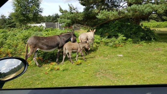 Roundhill Caravan Park & Campsite: 20160721_105556_large.jpg
