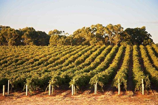 Rowland Flat, Australia: Other
