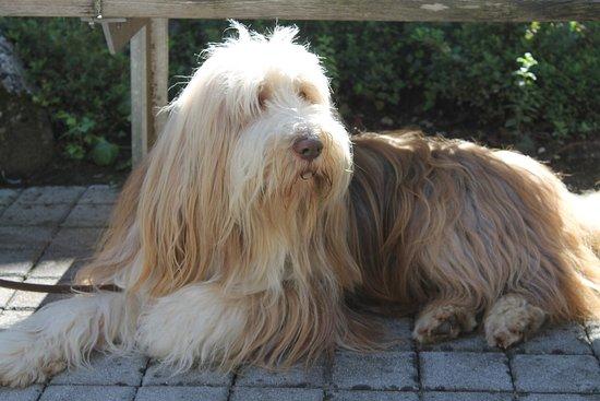Idro, Italia: Camping Rio Vantone - dogs are welcome