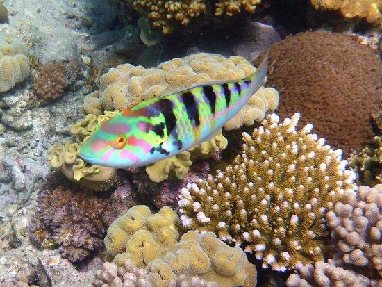 Cairns Region, Australia: photo0.jpg