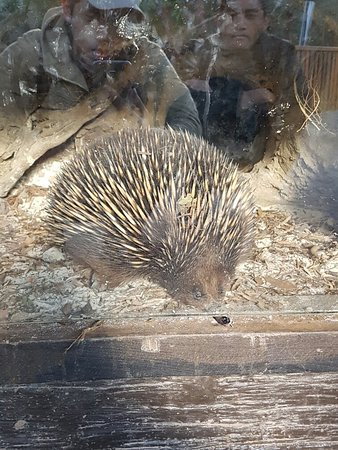 Healesville, أستراليا: 20160721_151017_large.jpg