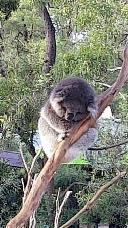 Healesville, أستراليا: Snapchat-6163653328540109095_large.jpg