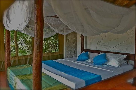 Barefoot Beach Camp : A beautiful experience a barefoot beach safari tent luxury