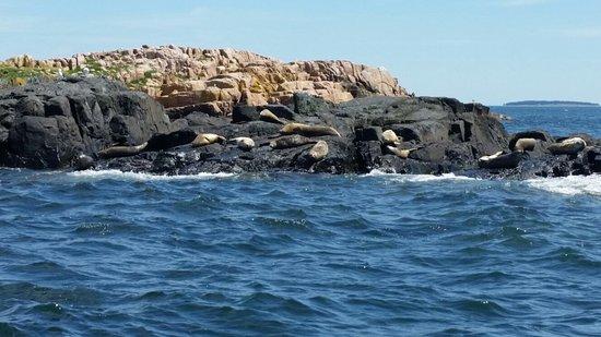 Bass Harbor照片