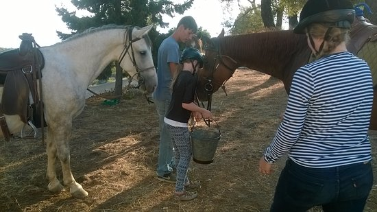 Spetses, Greece: Panagia Elonas, giving water to the horses