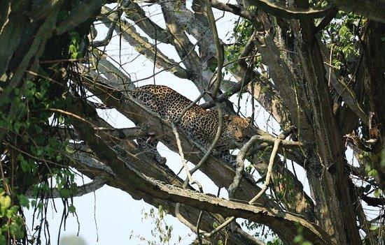 Kasese, أوغندا: При большом желании всегда встретите кошек ))