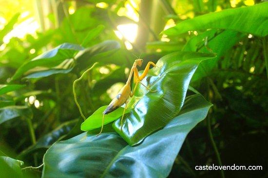Castelo Vendom: tropical garden