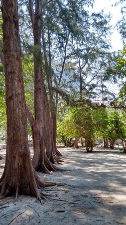 Poda Island: Trees to hide from the sun