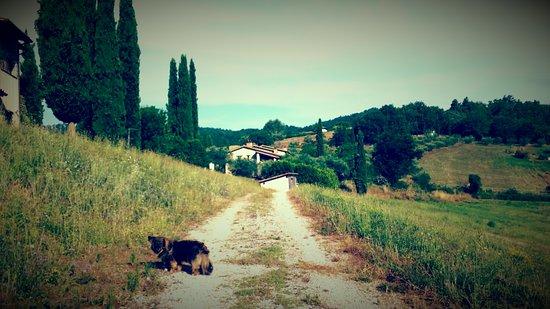 Foto de San Venanzo