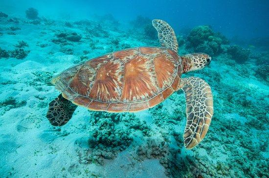 Holloways Beach, Αυστραλία: Great Barrier Reef