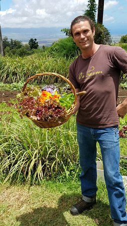 Kula, Havai: Our salad ingredients fresh from the garden with our excellent guide and the farm's arborist