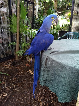 Nancy Forrester's Secret Garden: Beautiful parrot