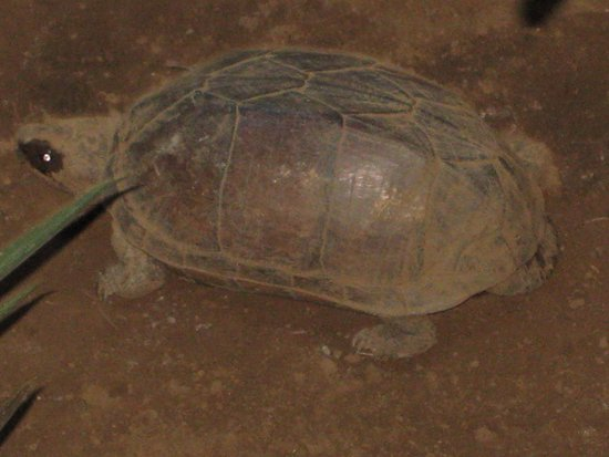 """Miss Margrit's Guest House: """"Mr. Slowski"""" the hotel official turtle"""