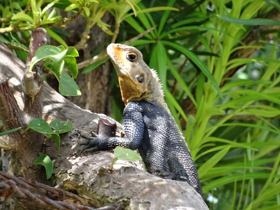 Homestead, FL: lizards are everywhere and this guy didn't scamper off and posed