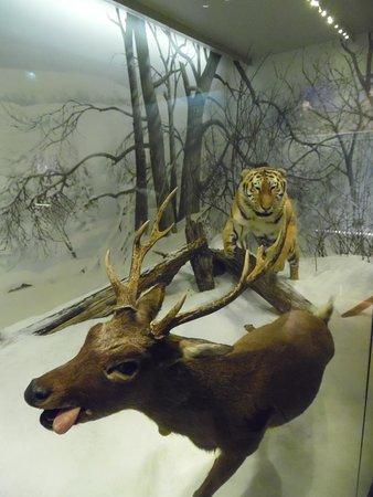 Naturhistorisches Museum (Luonnontieteellinen Museo): Gonitwa