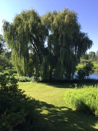 Pine Grove Park Bed and Breakfast Guest House: One view from deck of Willow View Guest House!