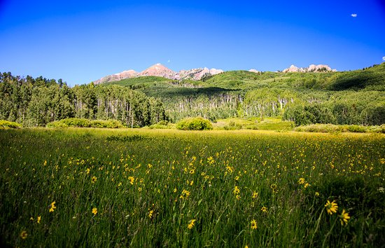Kebler Pass: Yellow