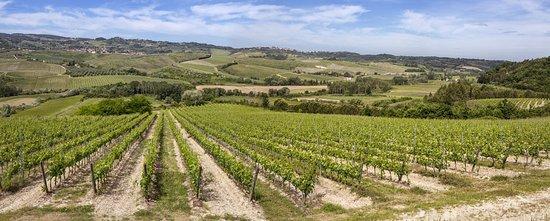 Terricciola, Italia: Badia di Morrona vineyards