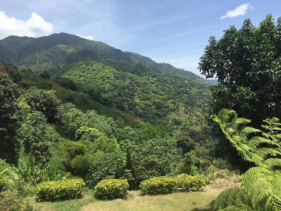 Blue Mountain Bicycle Tour : The view