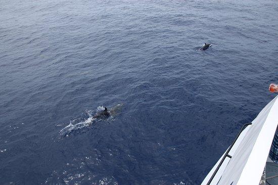 Maalaea, Hawái: Dolphins