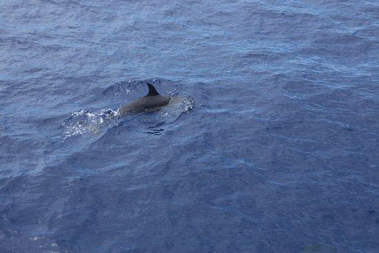 Maalaea, Havai: dolphin
