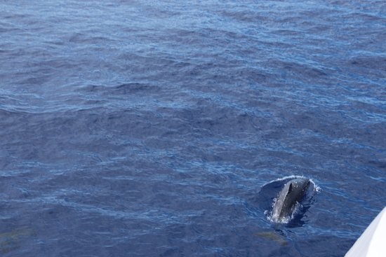 Maalaea, Χαβάη: Dophins