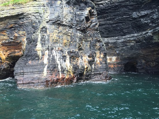 Dolphinwatch: Cliffs of Dingle peninsula