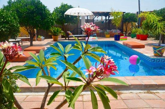 Pizarra, España: Zwembad en de bloeiende tempelboom
