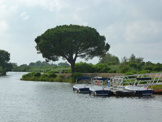Le Teich, Frankrig: Embarcadère des bateaux électriques