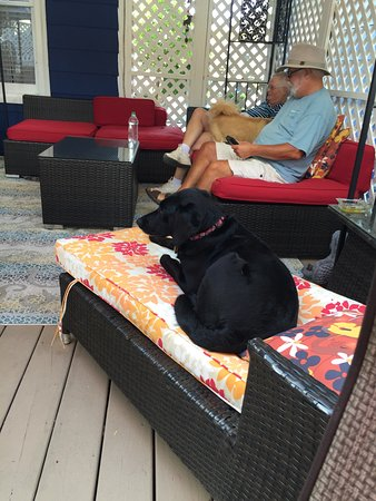 Bewitched U0026 BEDazzled Bed U0026 Breakfast: Our Dog Layla Enjoying A Lounge Chair  On The